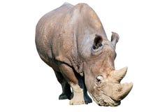 Geïsoleerde rinoceros Royalty-vrije Stock Fotografie