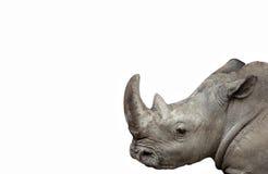 Geïsoleerde rinoceros Stock Afbeelding