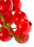 Geïsoleerde rode aalbes Royalty-vrije Stock Afbeeldingen