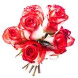 Geïsoleerde rozen royalty-vrije stock afbeelding
