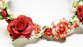 Geïsoleerde rozen Stock Foto