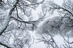 Geïsoleerde sneeuwboomtakken royalty-vrije stock foto
