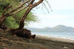 Geïsoleerde strand mistige achtergrond royalty-vrije stock afbeeldingen