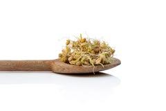 Geïsoleerde tarwekiemen, Stock Fotografie
