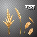 Geïsoleerde tarweoren en zaad Landbouwkorrel Vector eps10 Royalty-vrije Stock Fotografie