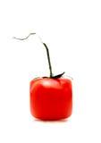 Geïsoleerde tomaat Stock Afbeelding
