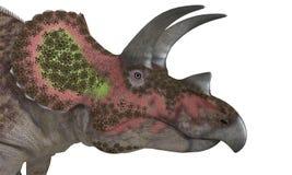 Geïsoleerde Triceratops Stock Fotografie