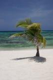 Geïsoleerde Tropische Eilandboom Stock Foto