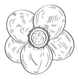 Geïsoleerde uitstekende bloem Stock Afbeelding