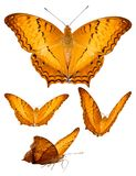 Geïsoleerde variatiepositie van kleurrijke vlinder Royalty-vrije Stock Afbeeldingen