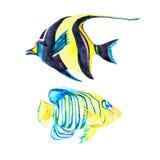 Geïsoleerde0 Vissen Tropische vissen op een witte achtergrond Stock Foto