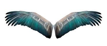 Geïsoleerde vleugel Royalty-vrije Stock Foto