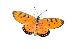 Geïsoleerde vlinder royalty-vrije stock foto's