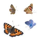 Geïsoleerde vlinders royalty-vrije stock afbeeldingen