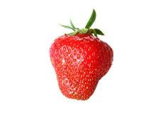 Geïsoleerde vruchten - Aardbeien Royalty-vrije Stock Fotografie