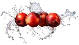 Geïsoleerde waterplons met nectarine Stock Fotografie