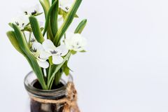 Geïsoleerde witte plastic bloem in het close-up van de glaskruik Stock Afbeelding