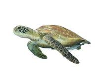 Geïsoleerde zeeschildpad royalty-vrije stock foto's