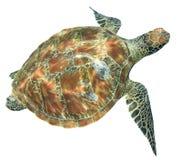 Geïsoleerde zeeschildpad stock afbeelding