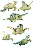 Geïsoleerde zeeschildpadden stock illustratie