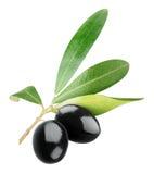 Geïsoleerde zwarte olijven stock foto