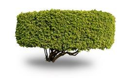 Geïsoleerdea boom Stock Afbeeldingen