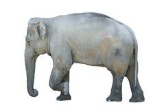 Geïsoleerdea olifant Royalty-vrije Stock Fotografie