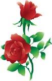 Geïsoleerdea rode rozen Royalty-vrije Stock Fotografie