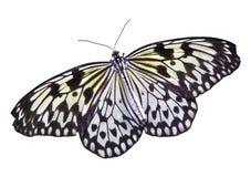 Geïsoleerdea Vlinder Royalty-vrije Stock Foto's