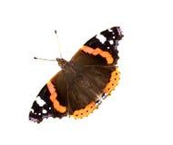 Geïsoleerdea zwarte en oranje vlinder royalty-vrije stock fotografie
