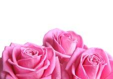 Geïsoleerdeb bloemen Royalty-vrije Stock Foto's