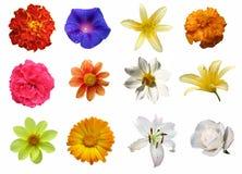 Geïsoleerded Bloemen Stock Afbeelding