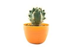 Geïsoleerded cactus Stock Afbeelding