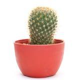 Geïsoleerded cactus Royalty-vrije Stock Foto
