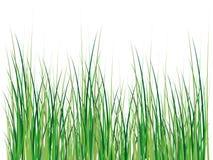 Geïsoleerded grasillustratie Vector Illustratie