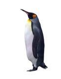 Geïsoleerded keizerpinguïn met het knippen van weg