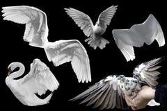 Geïsoleerded vleugels royalty-vrije stock foto