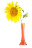 Geïsoleerded zonnebloemvaas Stock Fotografie