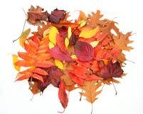 Geïsoleerdee de bladeren van de herfst Royalty-vrije Stock Fotografie
