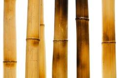 Geïsoleerdee de takken van het bamboe Stock Foto's