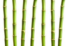 Geïsoleerdee de takken van het bamboe Royalty-vrije Stock Afbeeldingen