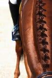 Geïsoleerdee het kapsel van het paard Stock Afbeeldingen