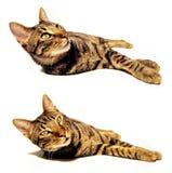 Geïsoleerdee kat Stock Foto's