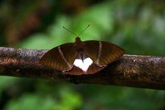 Geïsoleerdee vlinder stock foto's