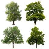 Geïsoleerdeg bomen Royalty-vrije Stock Afbeelding