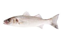 Geïsoleerdeg de baarzen van vissen Royalty-vrije Stock Afbeeldingen