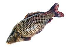 GeïsoleerdeG vissen Royalty-vrije Stock Foto