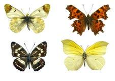 Geïsoleerdeg vlinders Royalty-vrije Stock Foto