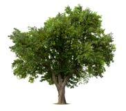 Geïsoleerdei appelboom stock foto's