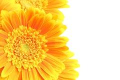 Geïsoleerdei de achtergrond van bloemen stock fotografie